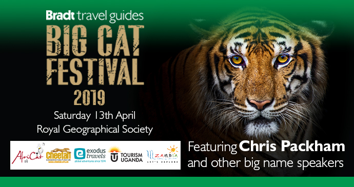 Big Cat Festival Banner
