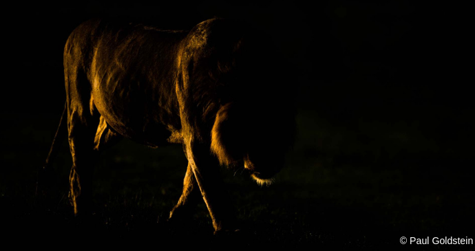 Dusk, Kenya © Paul Goldstein