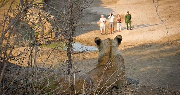 Walking safari in Zambia © Zambia Tourism