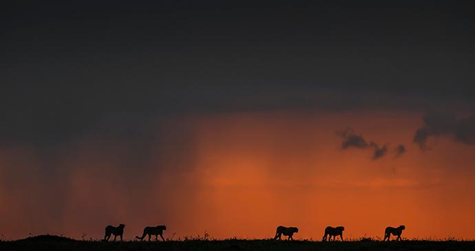 Famous five, Masai Mara, Kenya © Paul Goldstein
