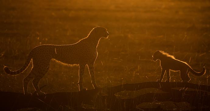 Future's Orange, Masai Mara, Kenya © Paul Goldstein