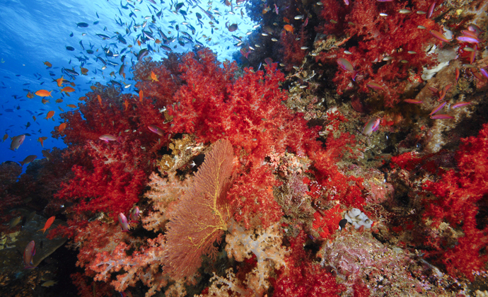 Carpet Reef Fiji by Scott Bennett