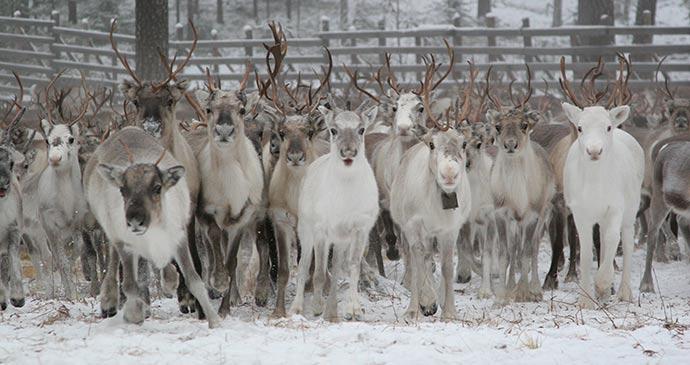 © Rovaniemi Tourism & Marketing