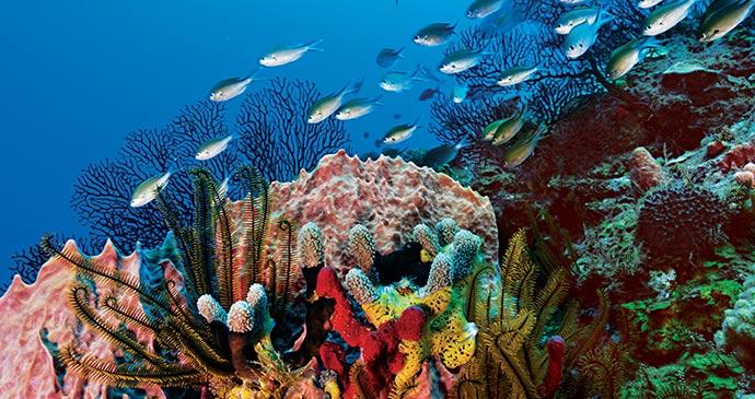 Scuba diving on Saint Lucia © Saint Lucia Tourist Board