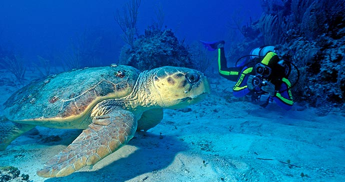 Scuba diving © Saint Lucia Tourist Board